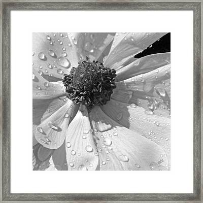 Anemone Poppy In Black And White Framed Print by Ben and Raisa Gertsberg