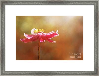 Anemone Warmth Framed Print by Natalie Kinnear
