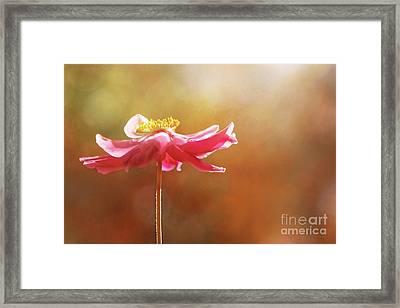 Anemone Warmth Framed Print