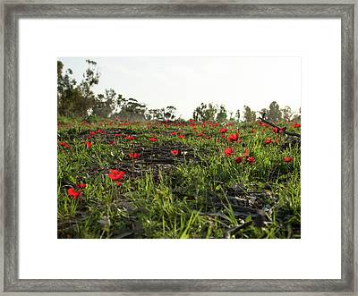 Framed Print featuring the photograph Anemones Forest by Yoel Koskas