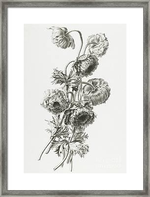 Anemones Framed Print by Gerard van Spaendonck