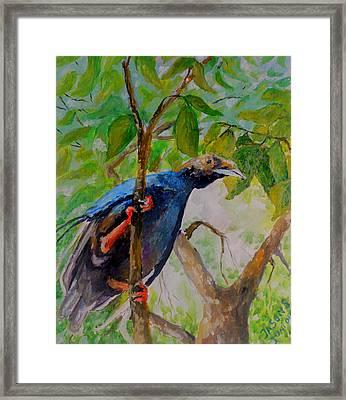 Angel Bird Of Moluccas Framed Print