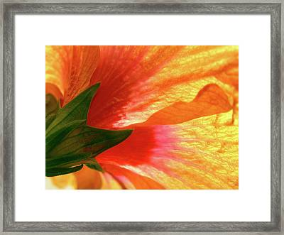 Framed Print featuring the photograph Angel Brushstrokes  by Marie Hicks