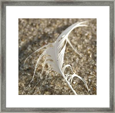 Angel Feather Framed Print by Mary Haber