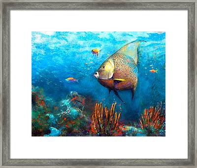 Angel Fish Framed Print by Andrew King
