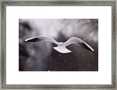 Angel - Gull In The Sky Framed Print