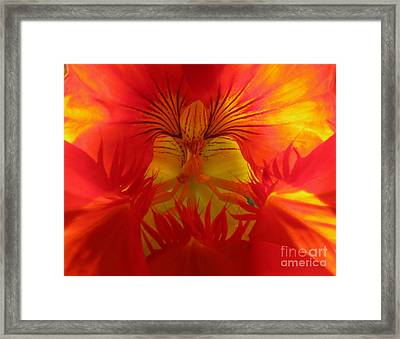 Angel In A Nasturtium Framed Print