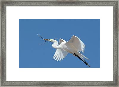Framed Print featuring the photograph Angel In Flight by Fraida Gutovich