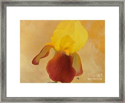 Framed Print featuring the photograph Angel Iris by Marsha Heiken