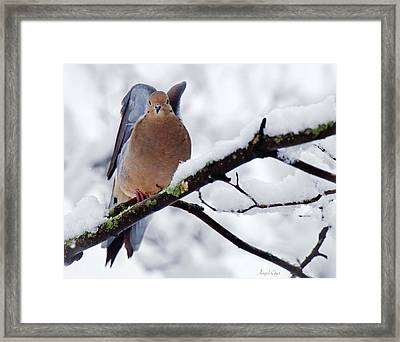 Framed Print featuring the photograph Angel Mourning Dove by Angel Cher