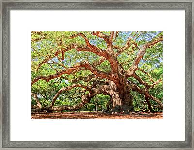 Angel Oak - Charleston Sc  Framed Print