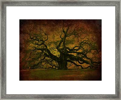 Angel Oak 3 Charleston Framed Print