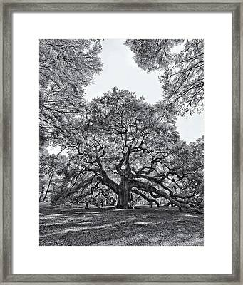 Angel Oak Framed Print by Dave Stegmeir