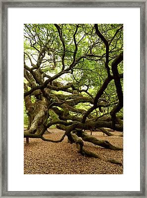 Angel Oak Framed Print by Greg Simmons
