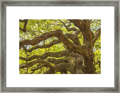 Framed Print featuring the photograph Angel Oak I by Steven Ainsworth