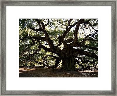 Angel Oak In November Framed Print by Susanne Van Hulst