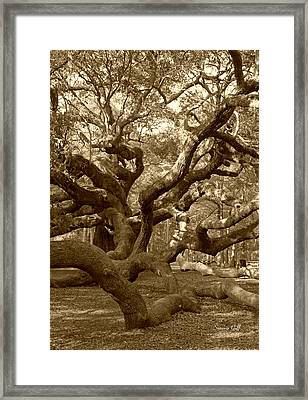 Angel Oak In Sepia Framed Print