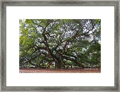 Angel Oak In South Carolina Framed Print by Catherine Sherman