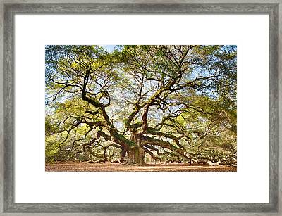 Angel Oak In Spring Framed Print