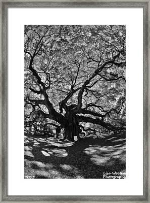 Framed Print featuring the photograph Angel Oak Johns Island Black And White by Lisa Wooten
