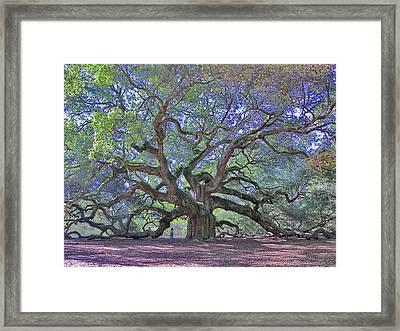 Angel Oak, John's Island, Sc Framed Print by Garry Turpin
