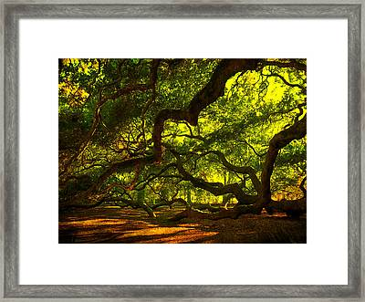 Angel Oak Limbs 2 Framed Print by Susanne Van Hulst