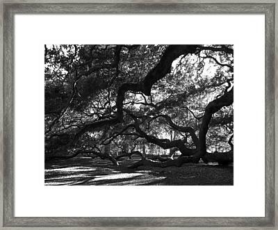 Angel Oak Limbs Bw Framed Print by Susanne Van Hulst