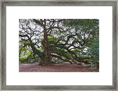 Angel Oak Side View Framed Print by Catherine Sherman