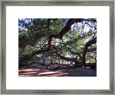 Angel Oak Side View Framed Print by Susanne Van Hulst