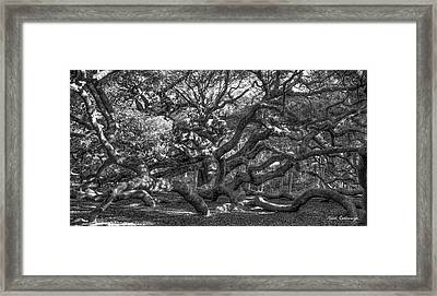 Angel Oak Spider Lights Johns Island South Carolina Framed Print by Reid Callaway