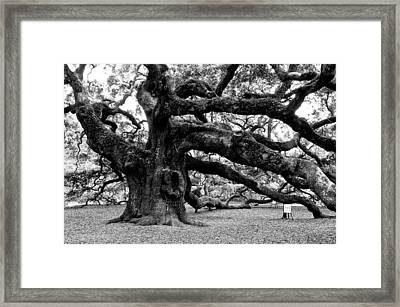 Angel Oak Tree 2009 Black And White Framed Print by Louis Dallara