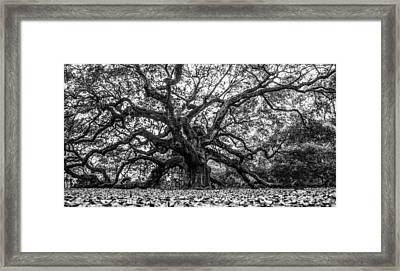 Angel Oak Tree Black And White  Framed Print by John McGraw