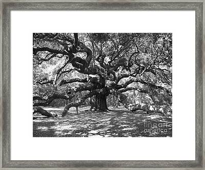 Angel Oak Tree Black And White Framed Print by Melanie Snipes