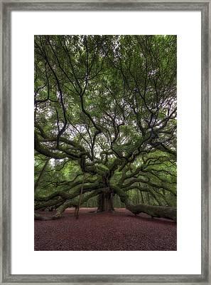 Angel Oak Tree, Charleston, Sc Framed Print