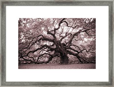 Angel Oak Tree Framed Print by Dustin K Ryan