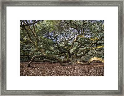 Angel Oak Tree From Behind Framed Print by John McGraw