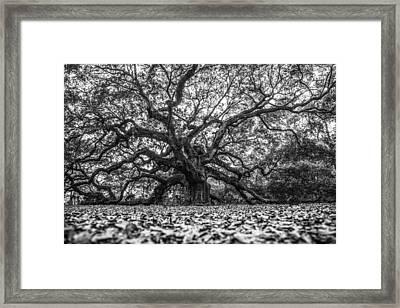Angel Oak Tree In B And W Framed Print by John McGraw