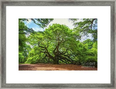 Angel Oak Tree In South Carolina  Framed Print