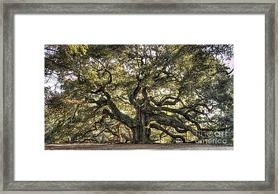 Angel Oak Tree Live Oak  Framed Print
