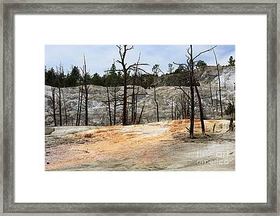 Angel Terrace At Mammoth Hot Springs Yellowstone National Park Framed Print by Louise Heusinkveld