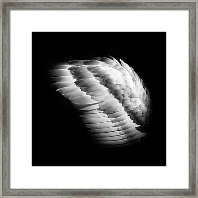 Angel Wing Framed Print
