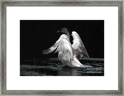 Angel Wings 2 Framed Print by Sharon Talson