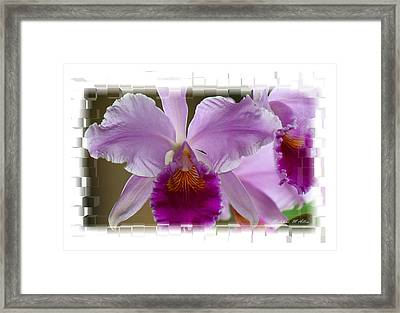 Angel Wings Orchid Framed Print by Madeline  Allen - SmudgeArt