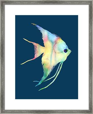 Angelfish I - Solid Background Framed Print by Hailey E Herrera