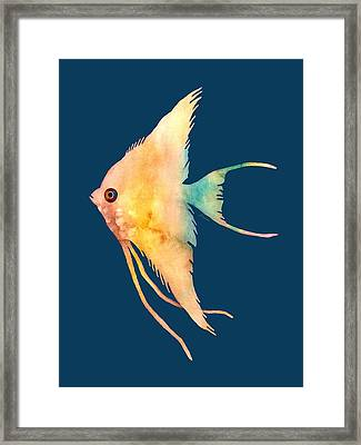 Angelfish II - Solid Background Framed Print by Hailey E Herrera