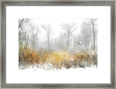 Angelica Framed Print by Diana Angstadt