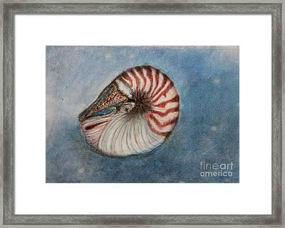Angel's Seashell  Framed Print by Kim Nelson