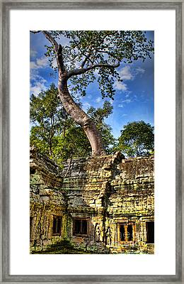 Angkor Wat And Tree Framed Print by Louise Fahy