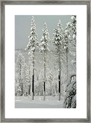 Angora Fire Trees II Framed Print