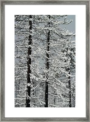 Angora Fire Trees Framed Print